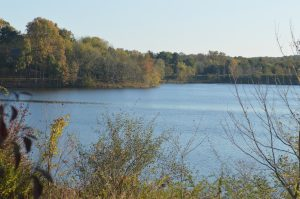 An image of a lake on a sunny day.