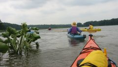 Picture taken in the Potomac River from the seat of a kayak showing additional kayakers in the front