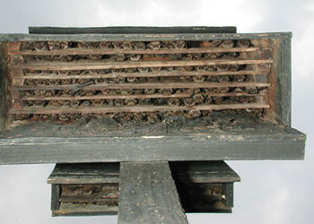Build a bat box icprb for Building a house in michigan
