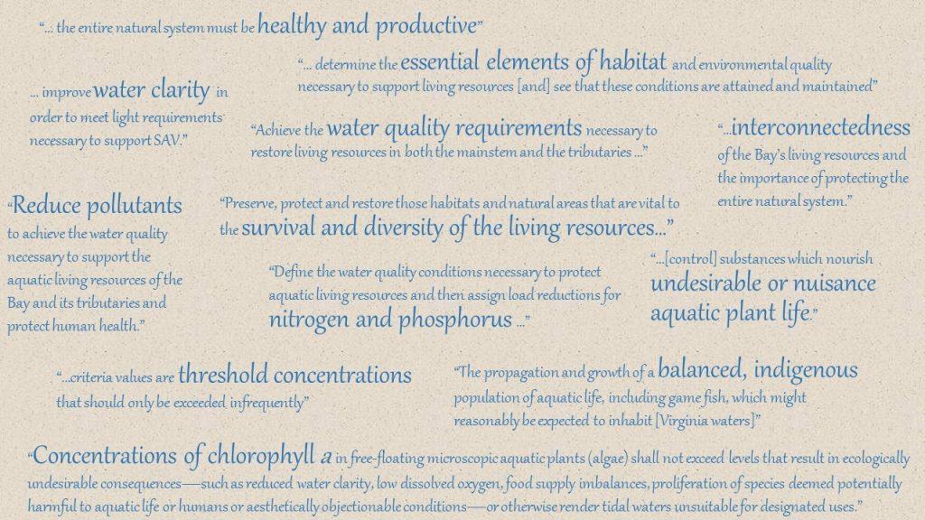 Chlorophyll Criteria