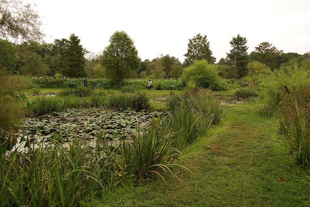 Kenilworth Park And Aquatic Gardens Icprb