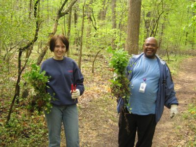 Two volunteers holding up invasive plants that they have removed from the forest.