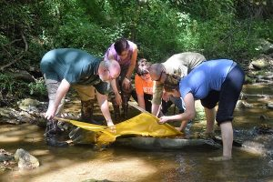 Five people standing in a stream looking at a net used for stream monitoring.