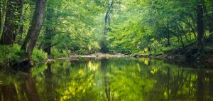 A calm stream surrounded by trees at Little Bennett Regional Park.